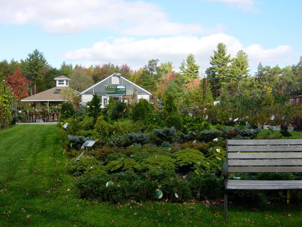 relaxing bench among shrubs