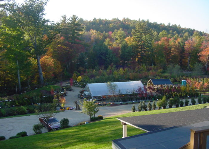 Scenic Nursery in all its fall glory