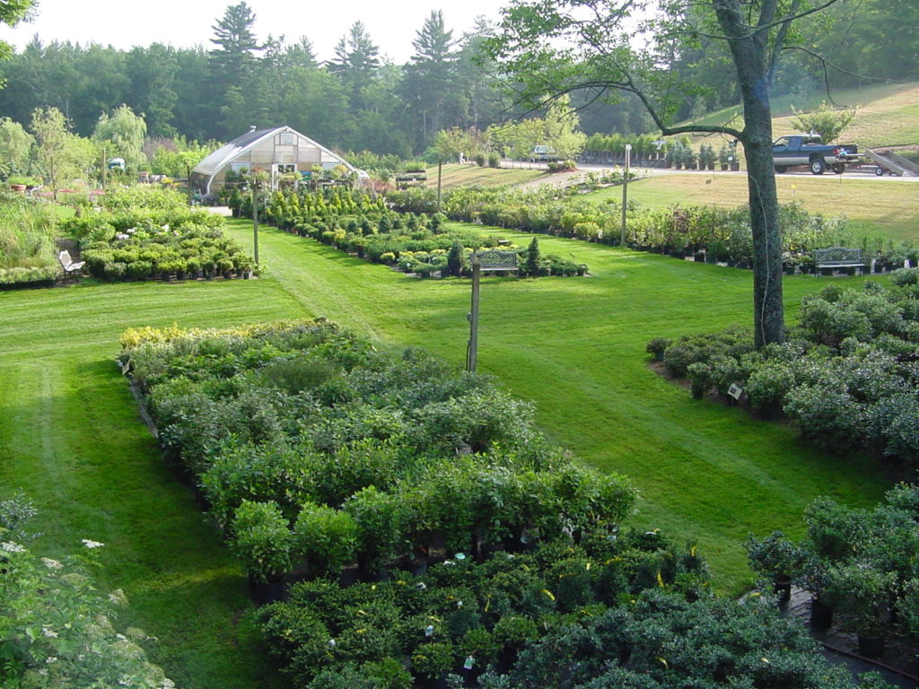 full sun shrubs add color and beauty to your landscape